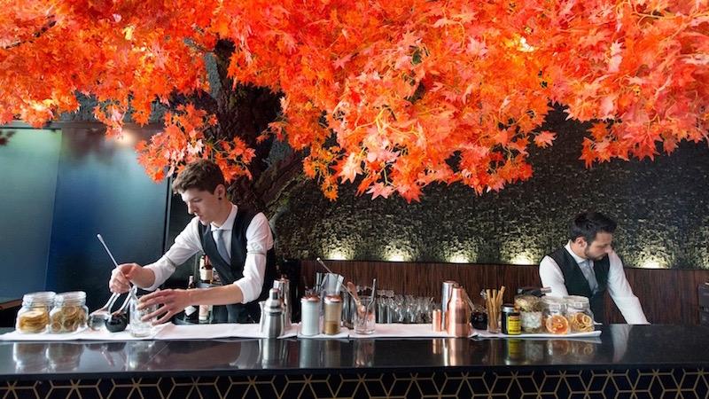The Tree   Barra de cócteles y tapas japonesas
