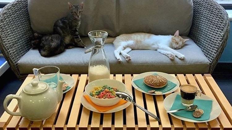 Polineko   Café de gatos japonés barrio de La Latina