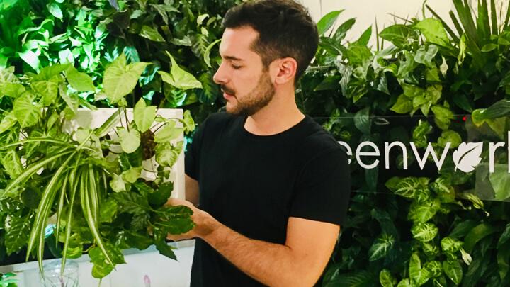 Greenworks Madrid Por qué regalar una planta esta Navidad