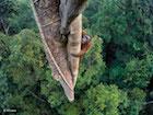 wildlife-photographer-year