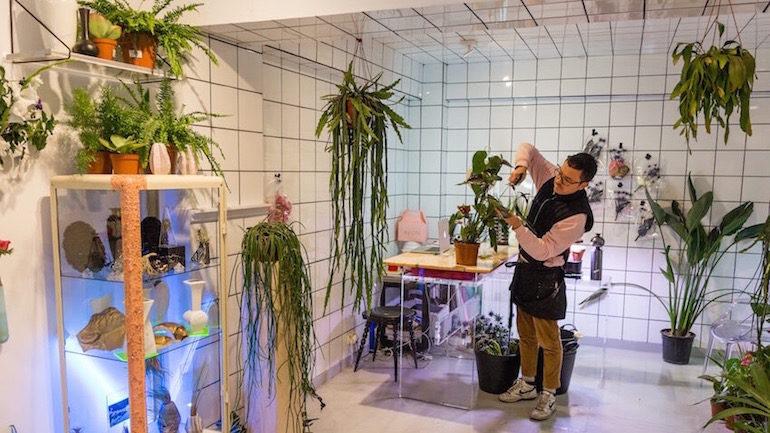 Orquídea Drácula floristería original y laboratorio de plantas en ... 0a865692fc5