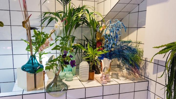 Orquídea Drácula floristería original y laboratorio de plantas en Malasaña