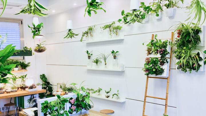Greenworks, tienda de jardines verticales y plantas en Arganzuela