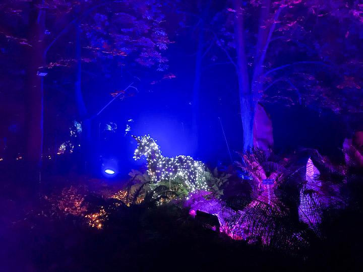 Naturaleza Encendida enciende la Navidad en el Real Jardín Botánico
